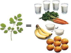 moringa has a lot of nutrition including more calcium than milk, more potassium than bananas, more vitamin a than carrots